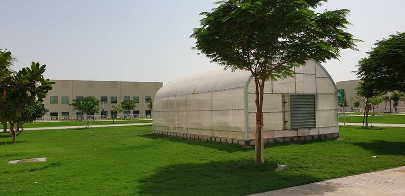 The Khayr Qatarna greenhouses are helping students learn about food security, environmental sustainability and healthy eating.