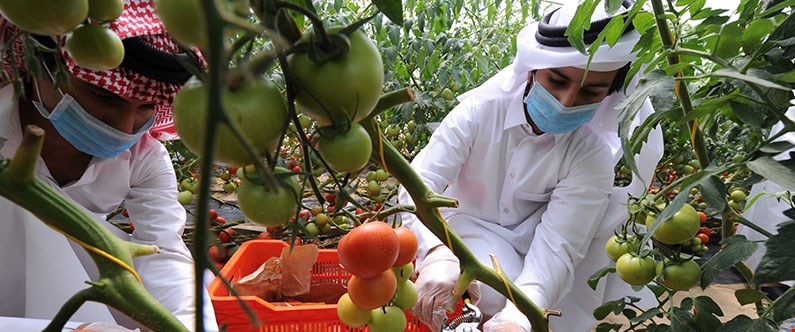 Qatar Foundation strives to promote sustainable food production