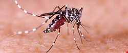 Public has limited knowledge of Zika virus, WCM-Q research finds