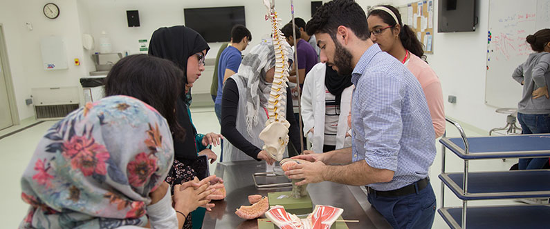 The students leaned about anatomy using various replicas in the classroom.